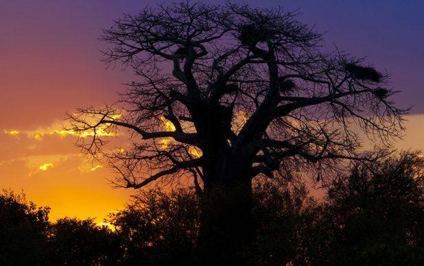 Schietfontein Safaris